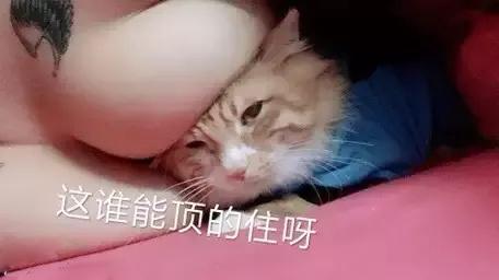 猫咪顶在奶子上:这谁顶得住呀