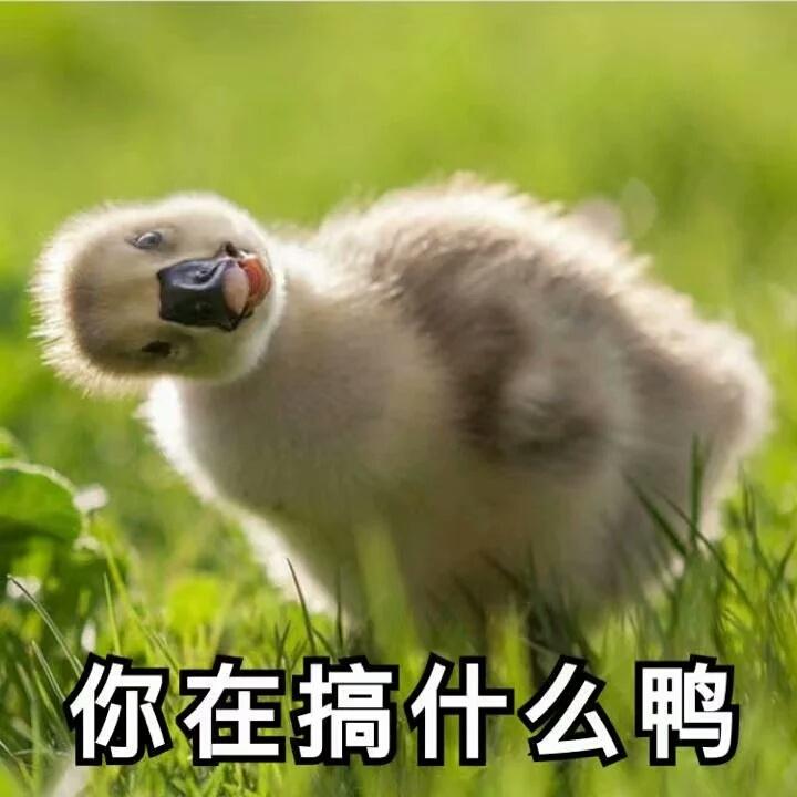 你在搞什么鸭