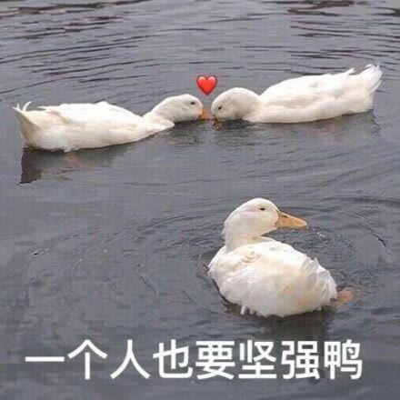个人也要坚强鸭