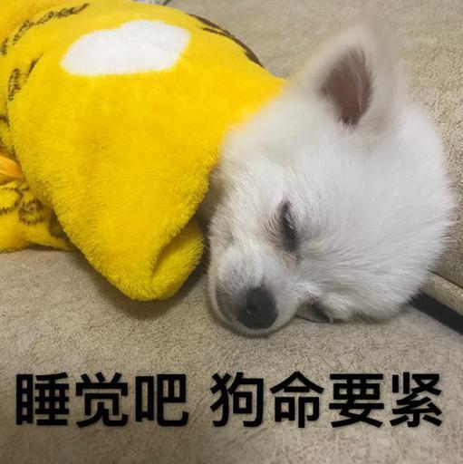 睡觉吧,狗命要紧