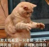 加菲猫:那天我看见一只老鼠 这么大吓死了!!还好跑得快