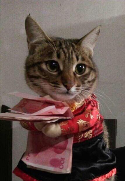 小猫抱钱钱