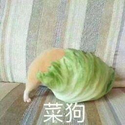 菜狗(包菜)