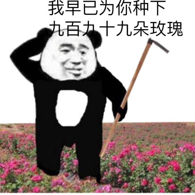 我早已为你种下九百九十朵玫瑰了(520情人节)