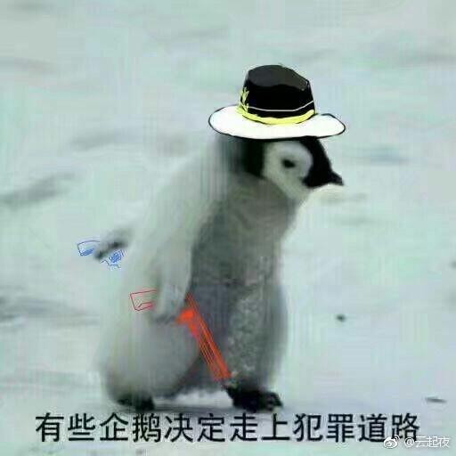 有些企鹅决定走上犯罪道路
