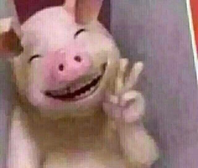 耶(猪猪)