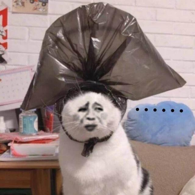 金馆长小猫(黑袋子)