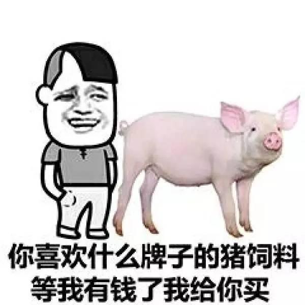 你喜欢什么牌子的猪饲料等我有钱了我给你买