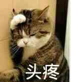 头疼!(小猫)