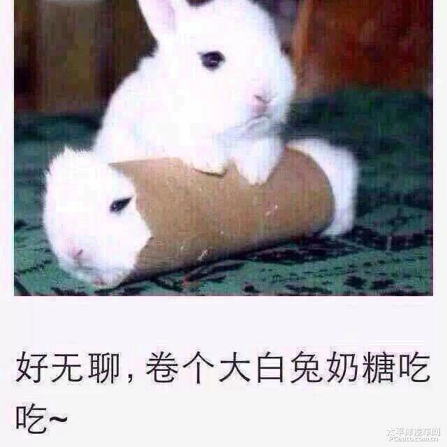 好无聊,卷个大白兔奶糖吃吃!(兔子)