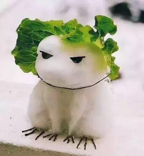 旅行青蛙(菜叶白雪版)