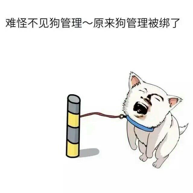 难怪不见狗管理,原来狗管理被绑了