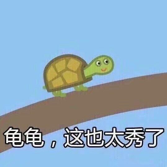 龟龟,这也太秀了