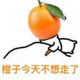 橙子今天不想走了!