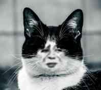 金馆长黑色小猫