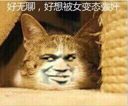 猫:好无聊,好想被女变态强奸