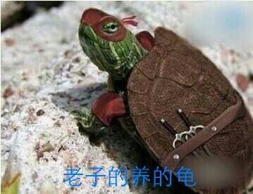 老子的养的龟