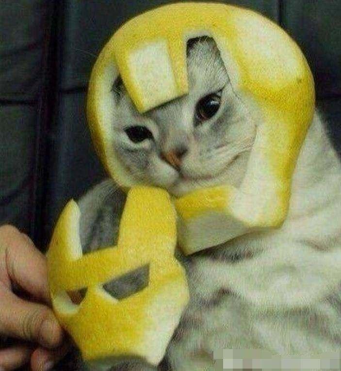 钢铁侠小猫