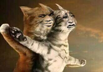 猫猫泰坦尼克号