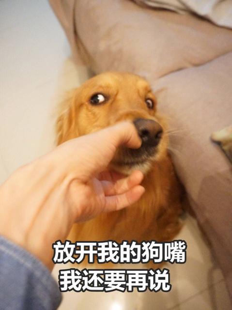 放开我的狗嘴,我还要再说