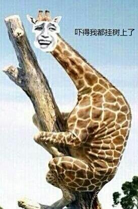 长颈鹿:吓得我都挂树上了 - 表情包