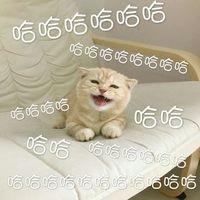 哈哈哈哈哈哈(小猫)