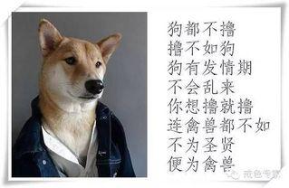 狗都不撸,撸不如狗,狗有发情期,不会乱来、你想撸就撸,连禽兽都不如不为圣贤,便为禽兽。
