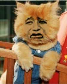猫猫金馆长趴椅子上