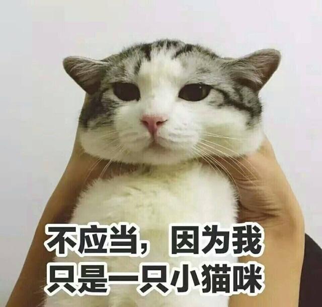 不应当,因为我只是一只小猫咪