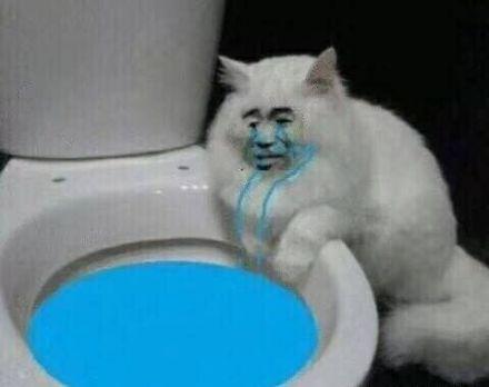 猫咪坐在马桶旁边哭
