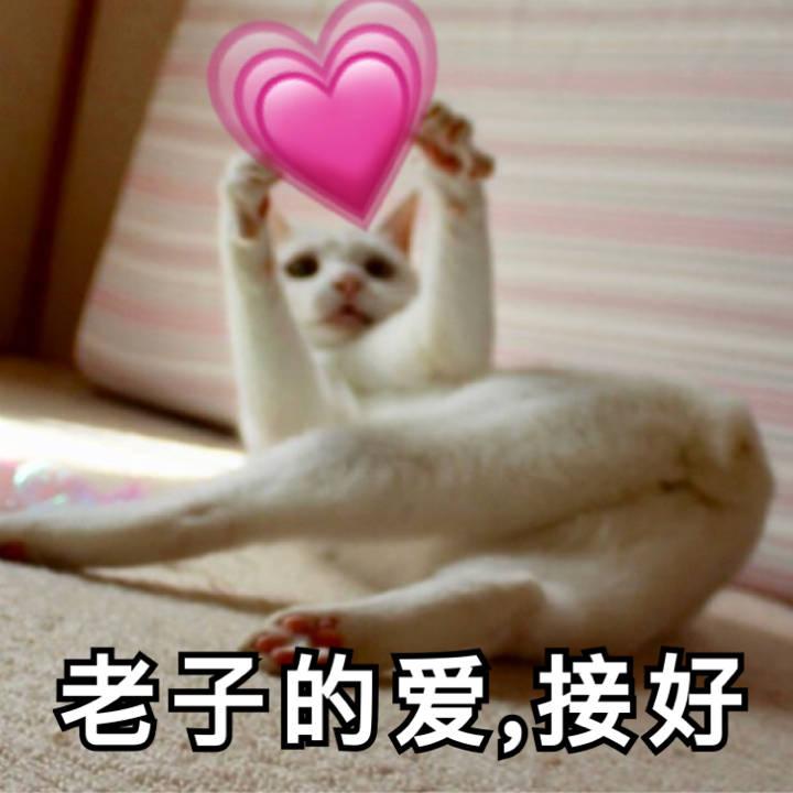 猫咪:老子的爱,接好 - 近期斗图表情包精选