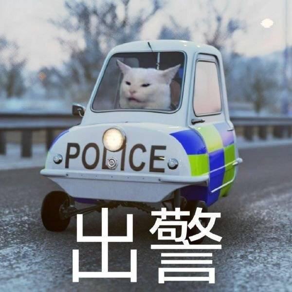 高清猫咪开警车 猫咪出警表情包